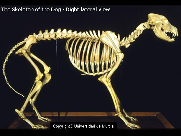 Whole dog - spine.jpg