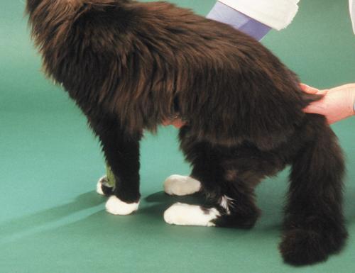 Feline Medicine 15.jpg