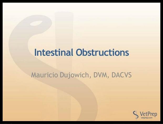 Intestinal obstruction VetPrep lecture.jpg