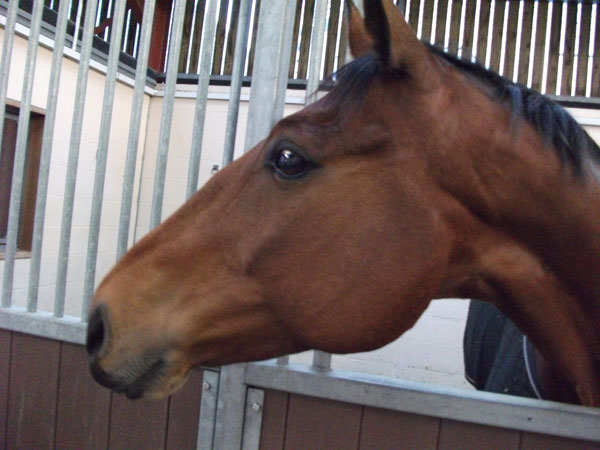 Equine head and neck.jpg