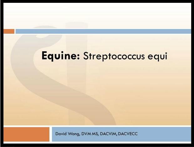 Streptococcus equi electure.jpg