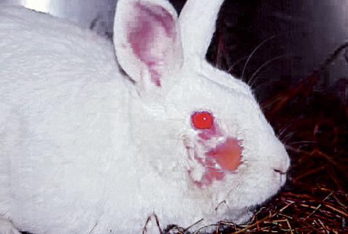 Rabbit Medicine 06.jpg