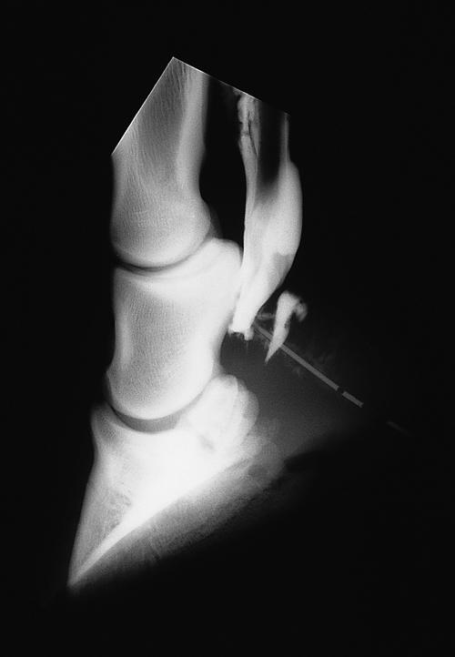 Equine Orthopaedics and Rheumatology Q&A 18.jpg