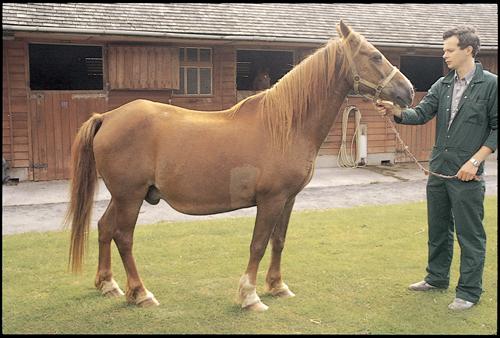 Equine Internal Medicine Q&A 17.jpg