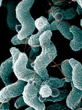 Campylobacter logo.jpg