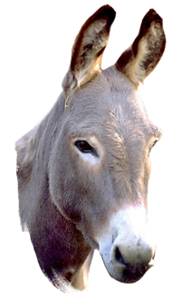 Donkey5.png