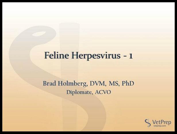 Feline Herpesvirus 1.jpg