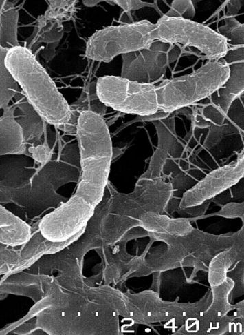 Bacteria logo.jpg