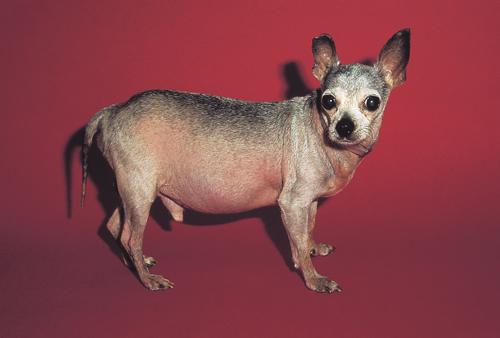Small Animal Dermatology Q&A 15a.jpg