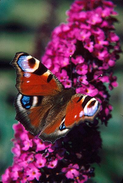Butterfly logo.jpg