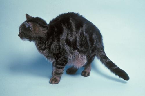 Feline Medicine 20.jpg