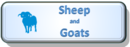 Sheep button.png
