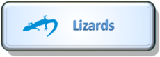 Lizard button.png