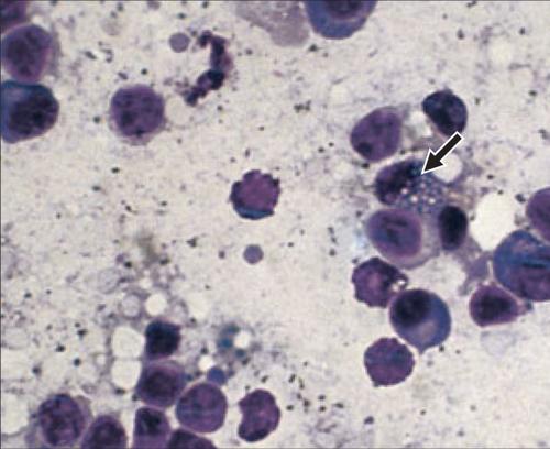 Cytology 8a.png