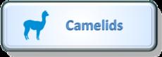 Camelids.png