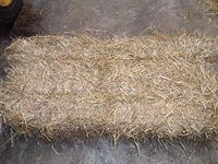 Straw1.jpg